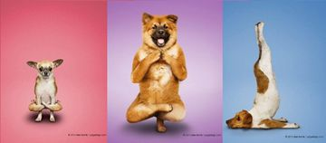 What? Dogs Doing Yoga?