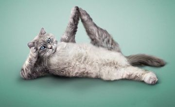 Yoga Cats - Purrrfect Postures!