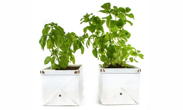 Self Watering Patch Planter For Herbs And Greens