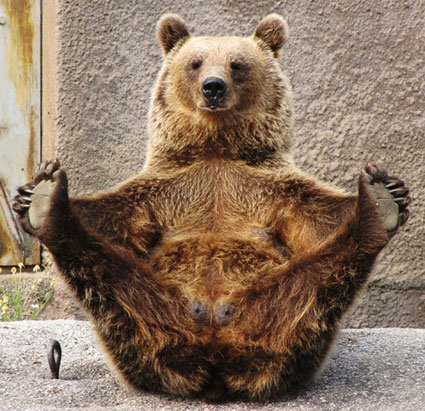 Bear Yoga Boat Pose