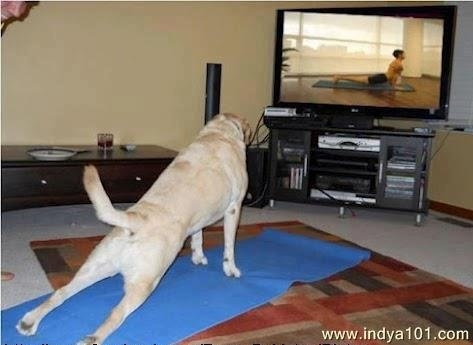 Dog TV Yoga