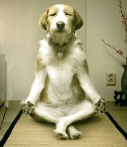 Dog Yoga Lotus Pose