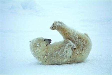 Polar Bear Plow Pose