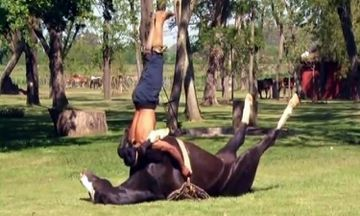 Must Watch - Horse Yoga Tames Traumatized Horses (VIDEO)