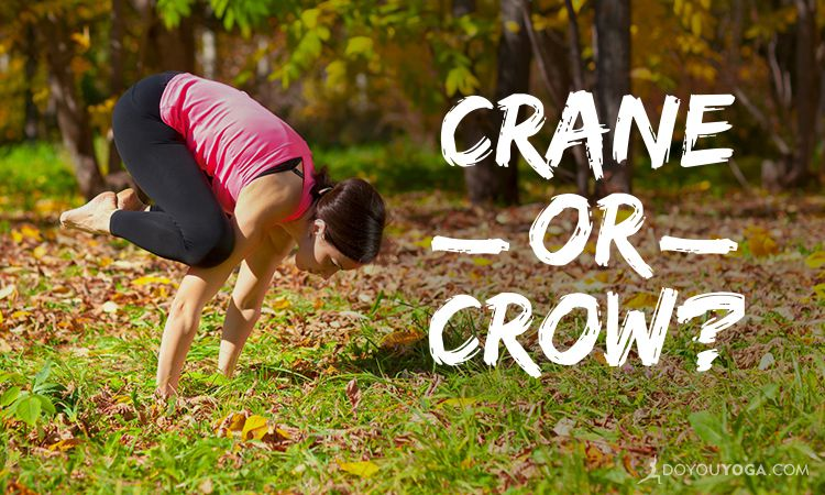 Crane Versus Crow - What's The Difference?