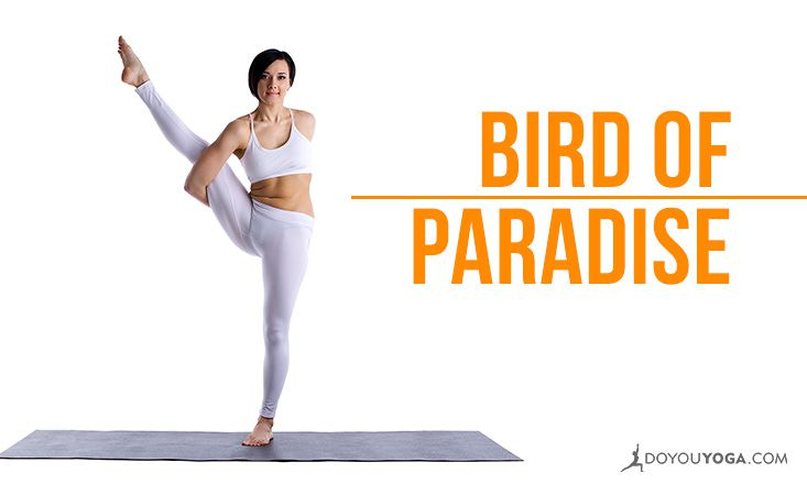 Bird Of Paradise Yoga 2
