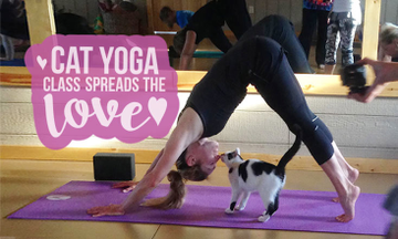 Feline Friendly Yoga Class Spreads the Love