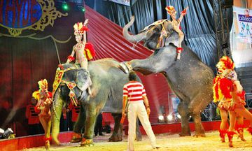 The Netherlands Bans Wild Animals from Circuses