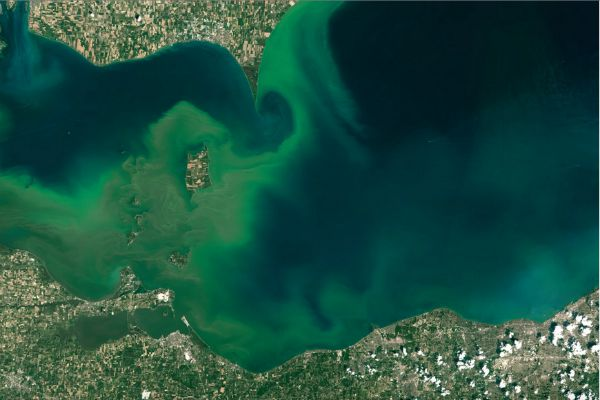 Algae Bloom in Lake Erie Photo Credit: The Washington Post