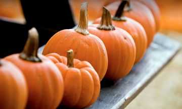 13 Reasons To Add Pumpkin To Your Diet